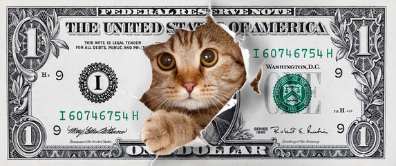 Cat tearing out of a dollar bill