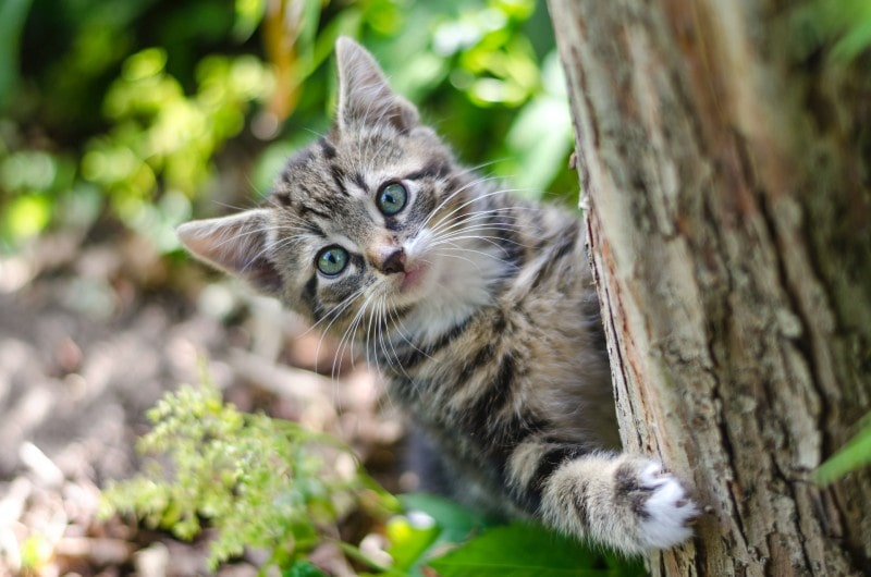 Cat peaking out of a tree
