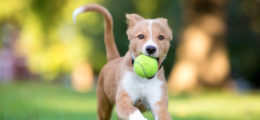 dog playing fetch