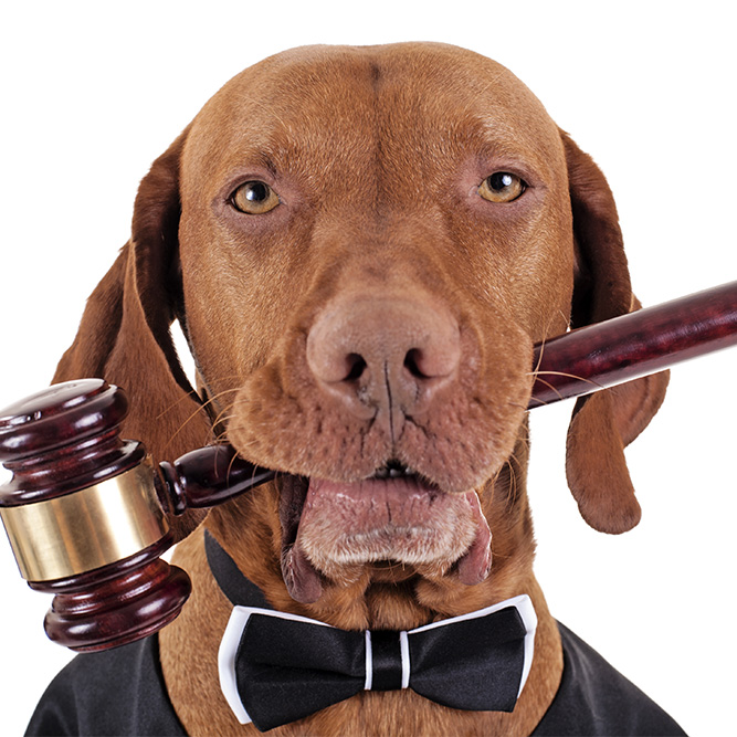 dog with gavel in mouth