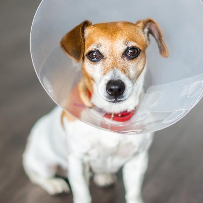 dog wearing a cone