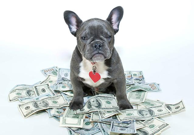 dog sitting on money