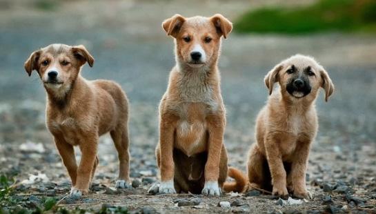 three stray puppies